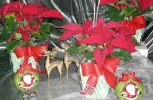 Flores típicas de Navidad desde 2,5€
